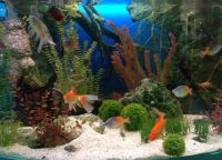 Задний фон для аквариума2