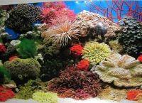 Задний фон для аквариума4