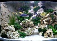 Задний фон для аквариума5