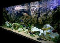 Задний фон для аквариума6