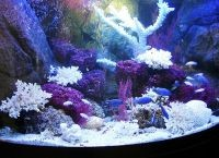 Задний фон для аквариума8