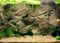 Задний фон для аквариума9