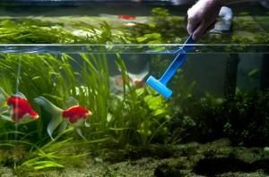 стенки аквариума