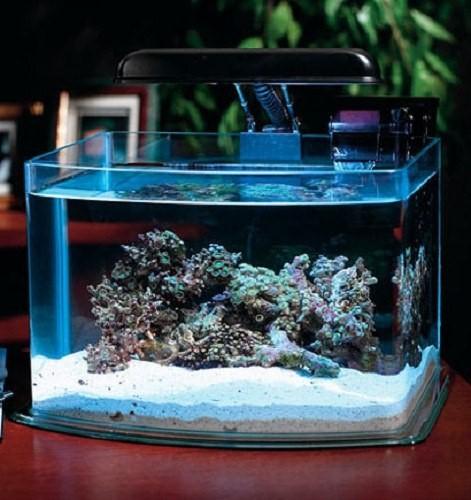 как менять воду рыбкам в аквариуме