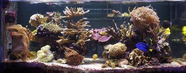 Аквариум с морской водой.