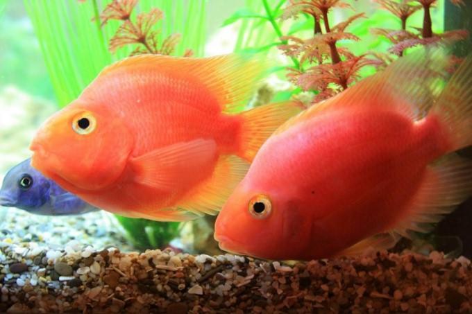Как часто надо менять воду в аквариуме