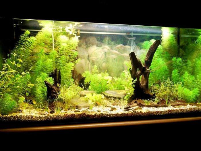 пошаговый запуск аквариума