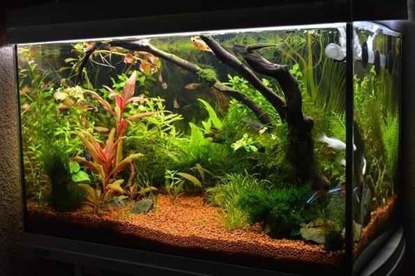 запущенный аквариум с растениями