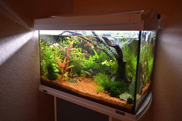 аквариум тетра