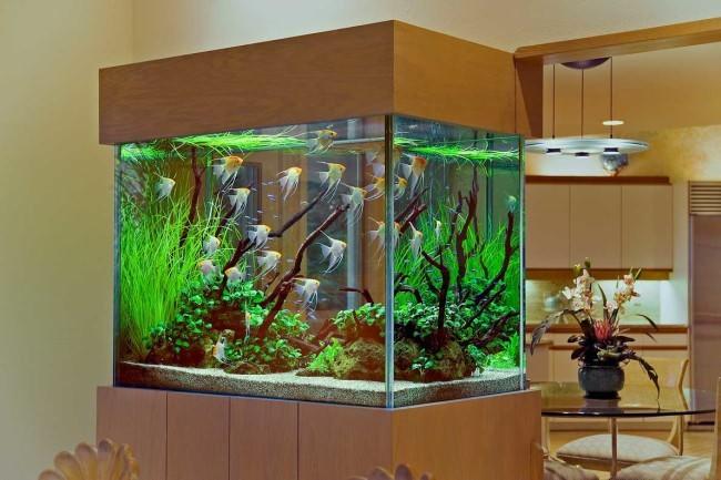 Большой аквариум с тумбой.