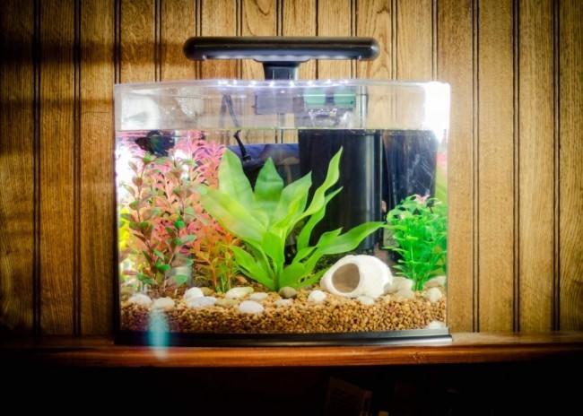 Декор аквариума.