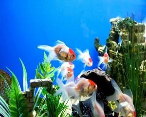 Как запустить аквариум в первый раз