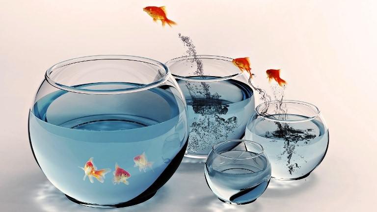 запуск рыб