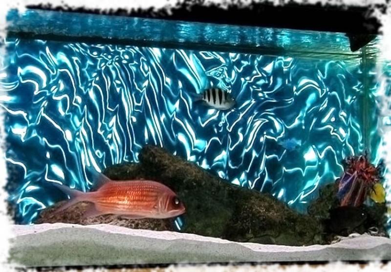 3D фон для аквариума