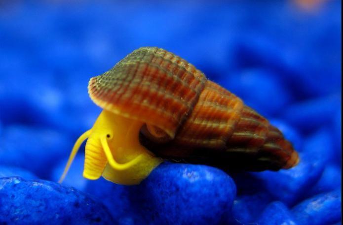 как подготовить аквариум к запуску