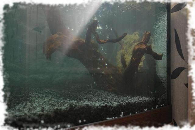 установка коргяги при запуске аквариума