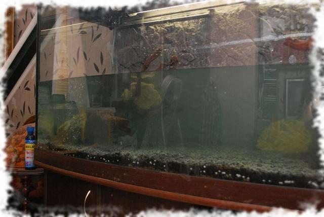 запуск аквариума установка декораций