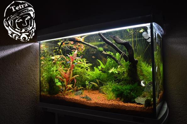 аквариум запуск