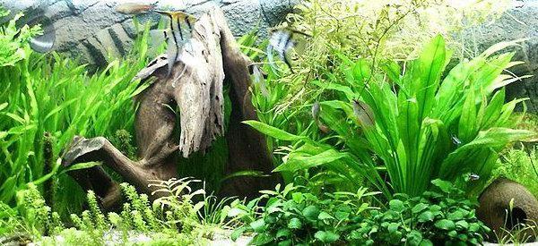 запуск нового аквариума