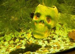 Почему зеленеет вода в аквариуме