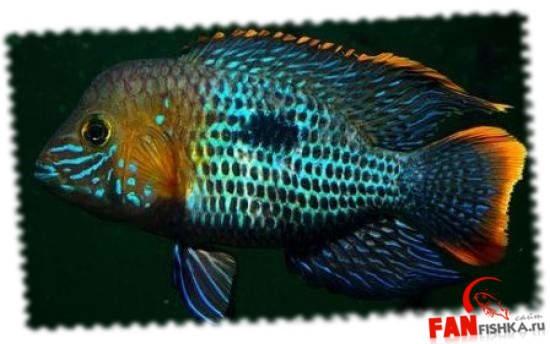 синие рыбки