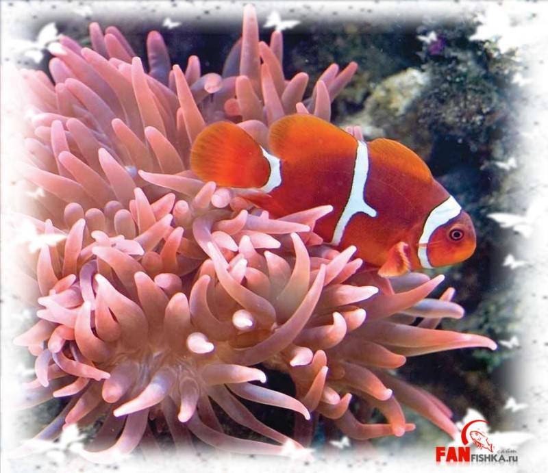 рыбка оранжевого цвета