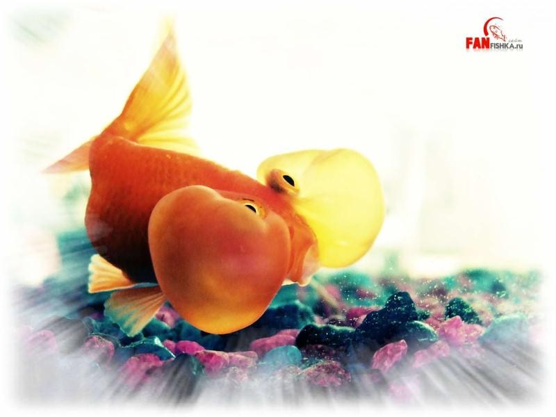 оранжевая рыба