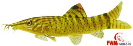 рыбки желтого цвета