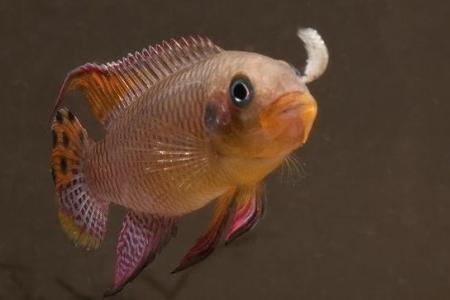 кормление рыбки в аквариуме