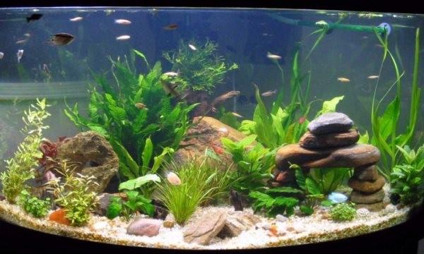 разные камни в аквариуме