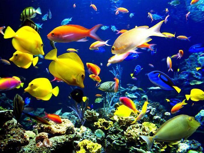 к чему снится живая рыба девушке