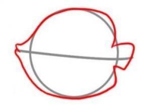 как нарисовать красивую рыбку 2