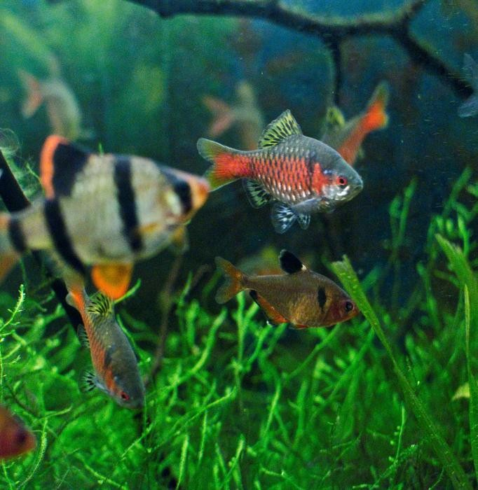 аквариумные рыбки гуппи все виды