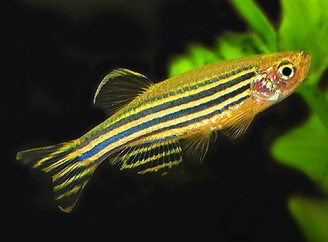 какие есть виды аквариумных рыбок