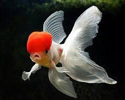 вид аквариумных рыб