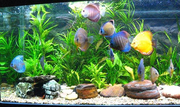 Что нужно рыбкам для комфортного проживания в аквариуме?