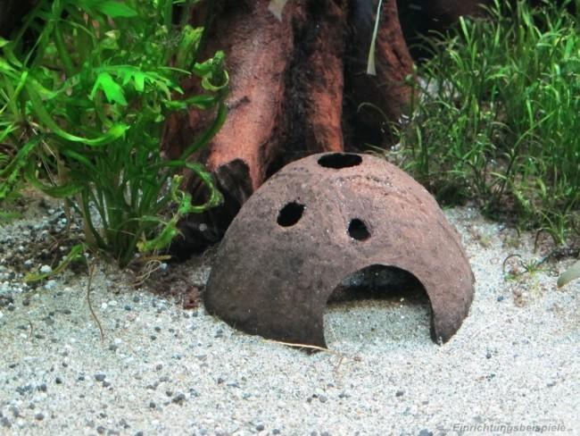 Подводные декорации из кокоса.