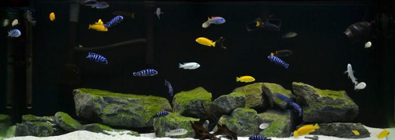 Камни как украшение аквариума