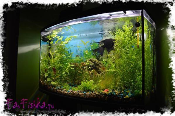 Светодиодная подсветка растений своими руками растения фото 854