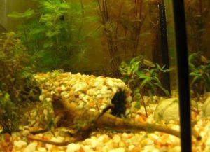 Декор для аквариума своими руками17