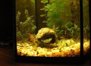 Декор для аквариума своими руками18