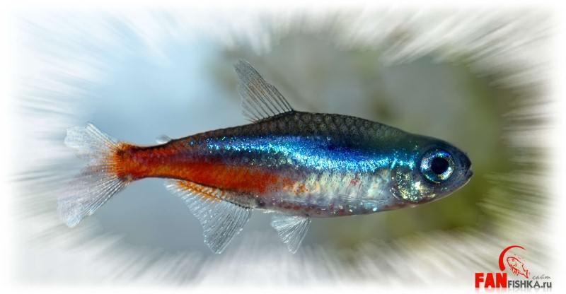 почему умерла рыбка неон